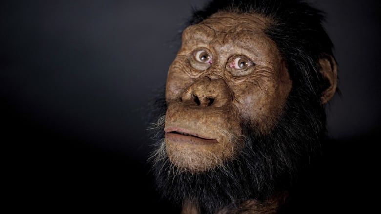 Scientists reveal 3.8 million-year-old face of prehuman ancestor