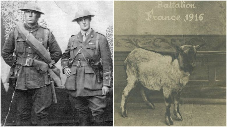 A goat comforted troops in WW I. Now a museum curator wants to find his grave