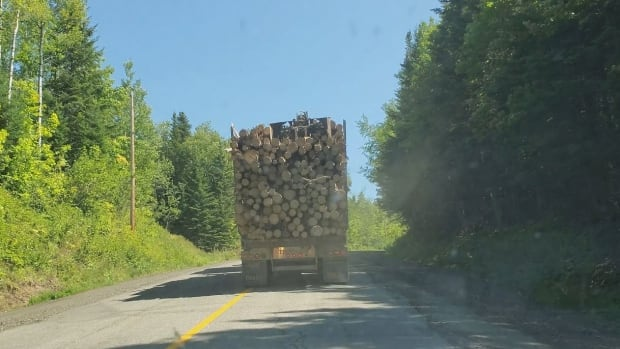 Canadian forestry companies in U.S. environmental group's report say criticisms oversimplied, misleading   CBC News