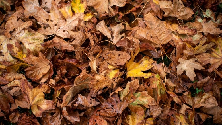 POLL: Should you listen to science and not rake your leaves?