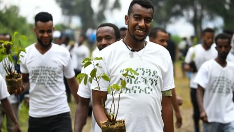 Tree planting in Ethiopia