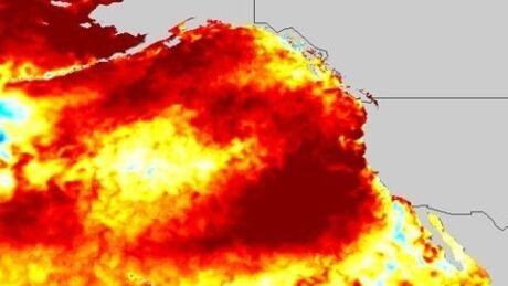 marine heatwave 2019 the blob