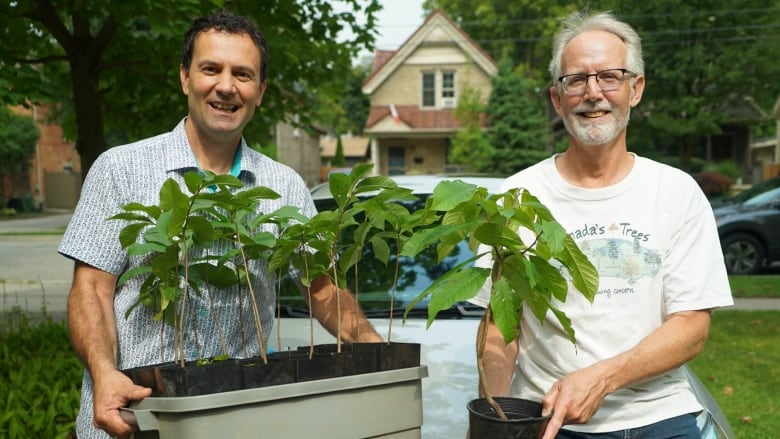 How you can get your hands on one of the rarest trees in Canada