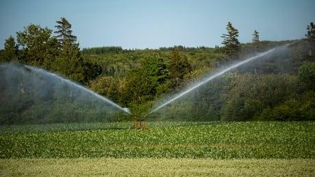P.E.I. crop irrigation farm