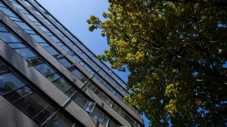 Tree Canopy Vancouver high rise with tree