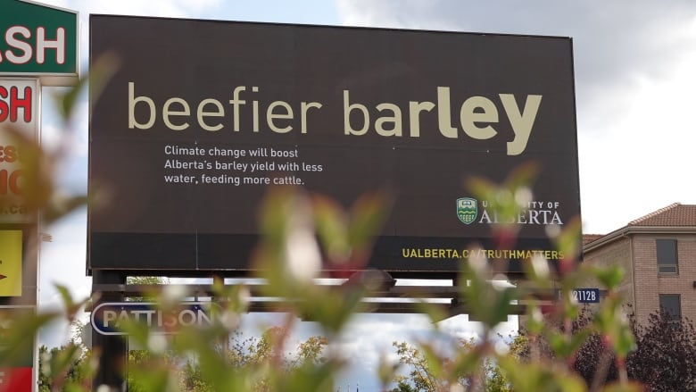 Beefier barley' researcher says her work does not promote