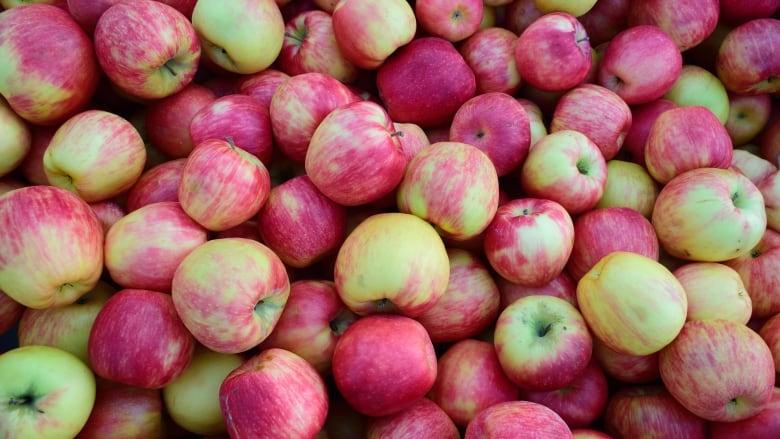 Bowen Islanders welcome hard 'core' fruit fans to Applefest on Saturday