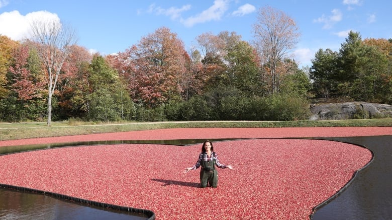 This cranberry farm promotes ecotourism and invites guests to take the plunge