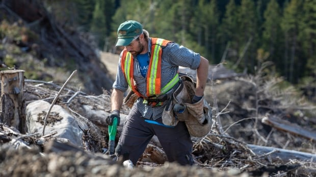 Forestry sector scrambles to recruit tree planters to sow millions - perhaps billions - more seedlings