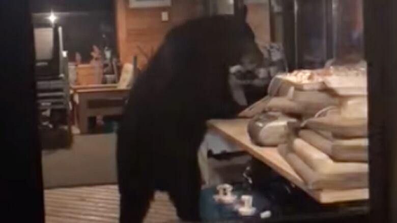 Black bear breaks into cabin, stuffs itself with Thanksgiving desserts