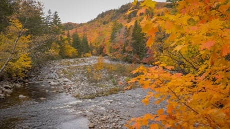 How does climate change affect the fall colours? One researcher aims to