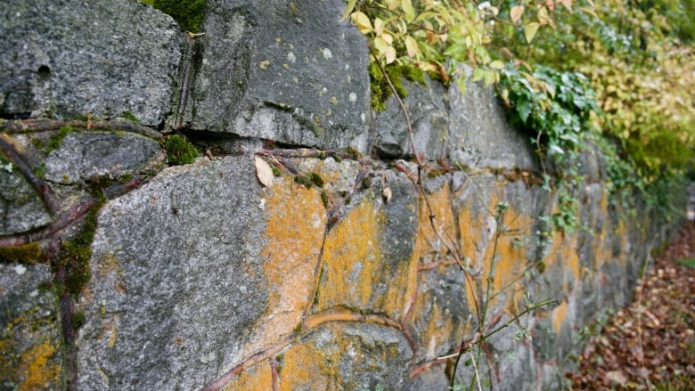 Developer temporarily halted after removing parts of historic 122-year-old wall in Oak Bay, B.C.