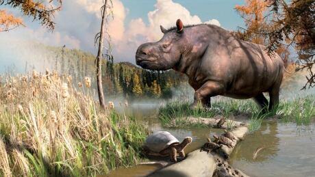 Yukon rhino, tortoise, and turtles