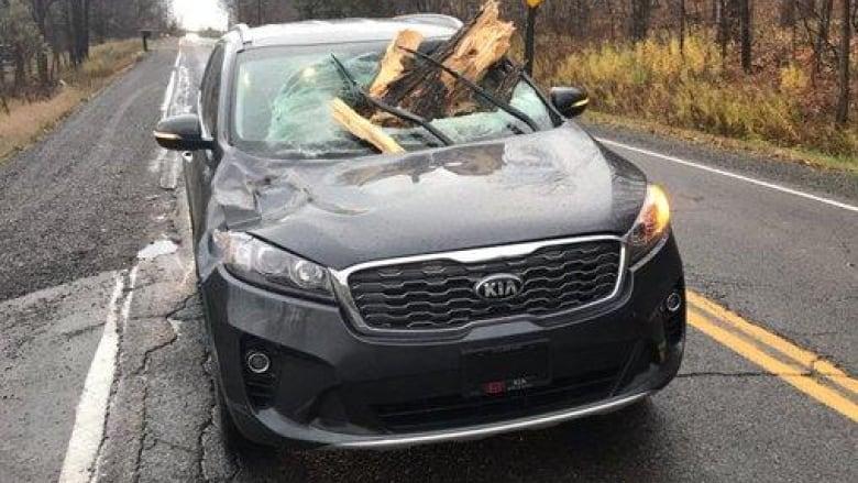 Wild wind whips up damage in Ottawa area