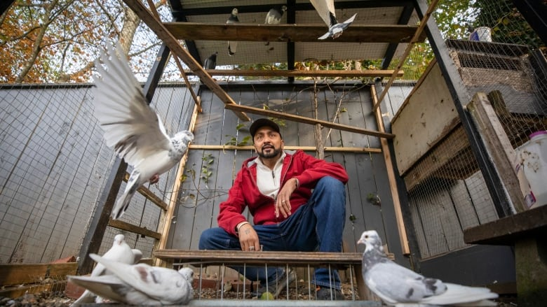 North Vancouver taken to B.C. Supreme Court over pigeon ban that targets a councillor's neighbour