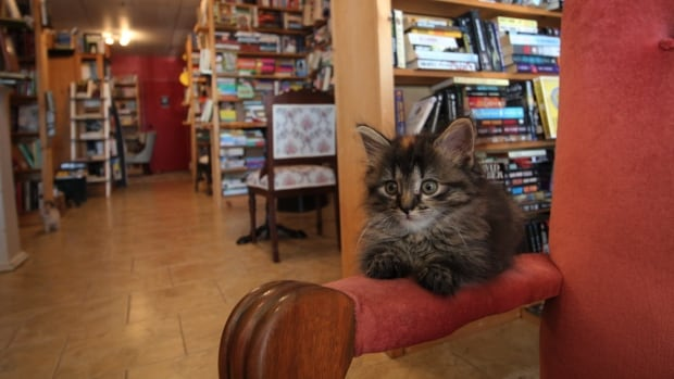 These kittens live inside a N.S. bookstore, to the delight of customers
