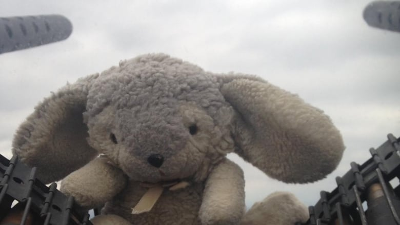 Have you seen Bunny? Stuffed 'good luck charm' goes missing from Lancaster mid-flight