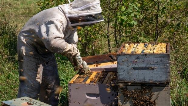 The sweet sting of Nova Scotia's tiniest 'livestock' industry