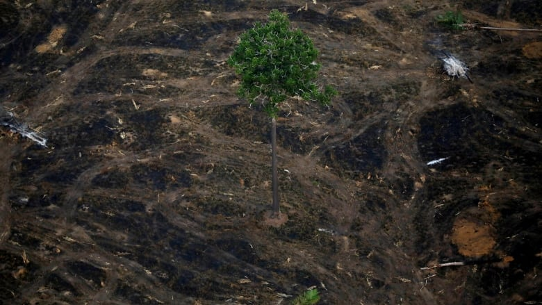 Brazil Amazon Deforestation Soars To 11 Year High Cbc News