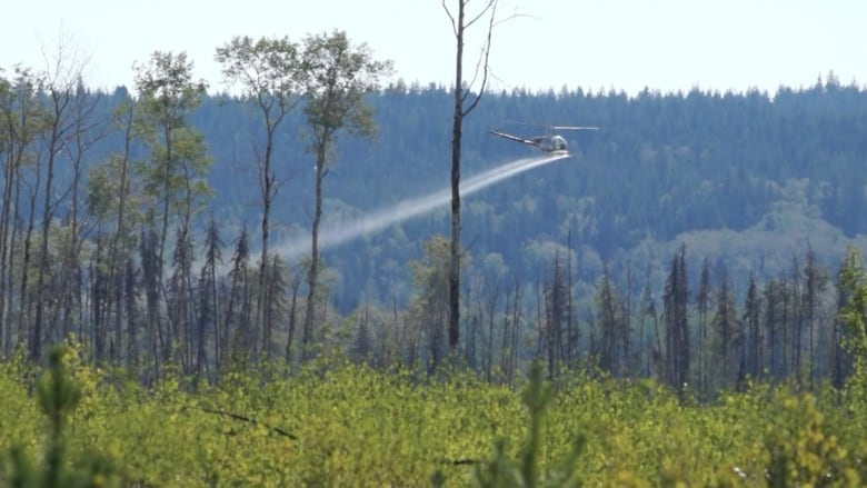 Grooming forests could be making fires worse, researchers warn