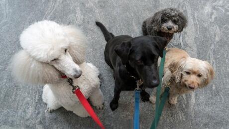 dog traits