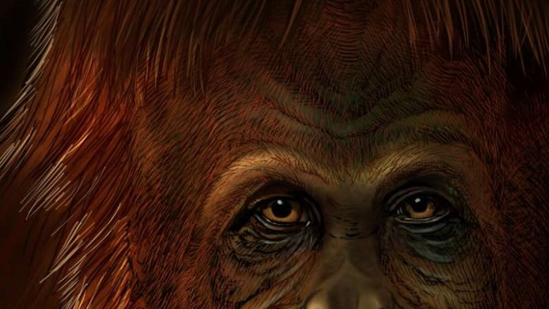 The greatest ape — an extinct, half-ton monster — now has its place on our family tree