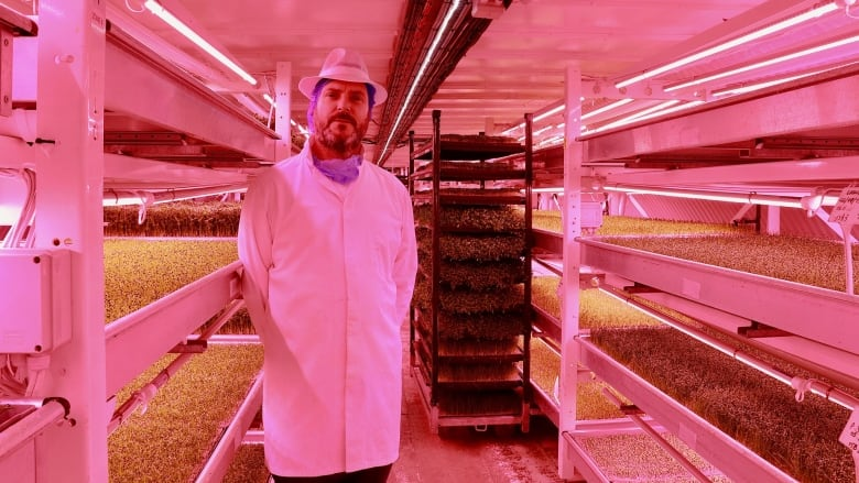 A WW II bunker under London's streets is now a vegetable farm