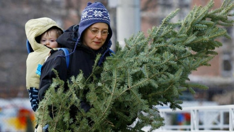 O Tannenbaum! Natural Christmas trees in short supply across Alberta