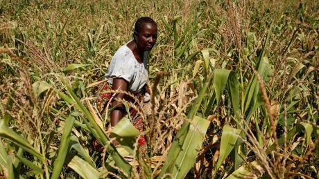 ZIMBABWE-FOOD/UN