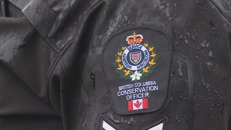 Conservation officers blame residents after 6 bears destroyed in 2 days in Port Coquitlam, B.C.