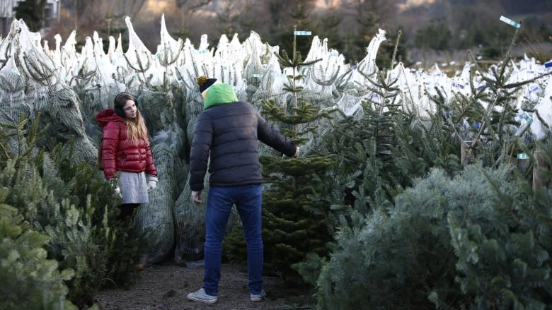 Pricey Christmas trees traced back to 2008 financial crisis
