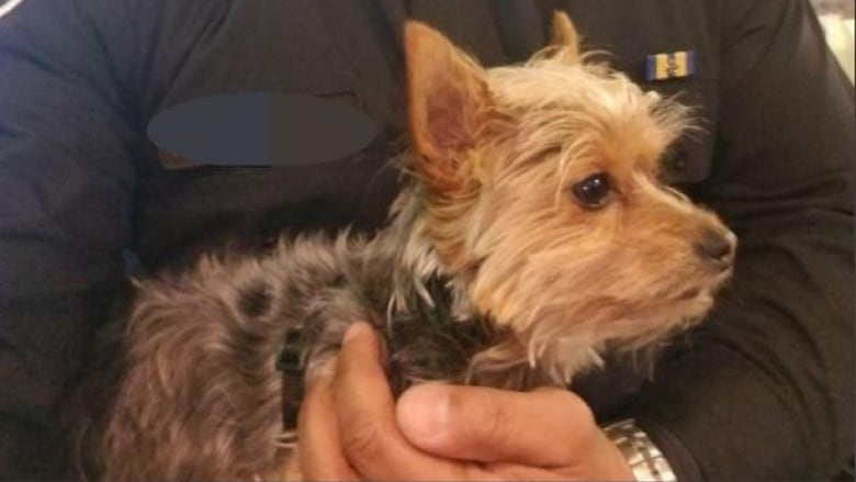 Dog stolen from owner during medical emergency turned in to police