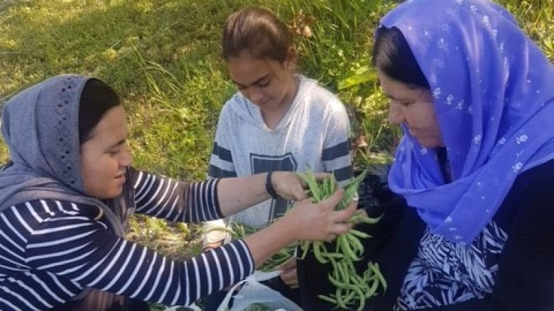 'A healing farm:' Produce project helps Yazidi refugees in Manitoba plant roots.