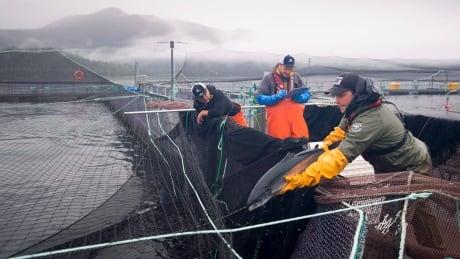 FedElxn Salmon Farms 20191002