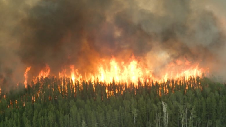 Repeated N.W.T. wildfires can hit boreal forests hard