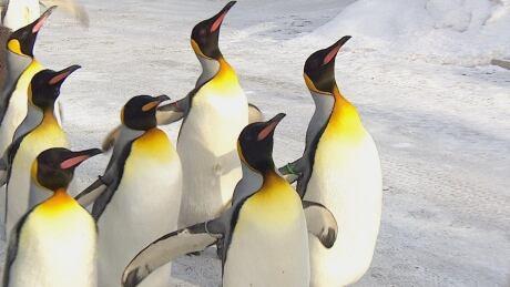 penguin walk zoo
