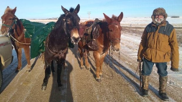 French man exploring Canada and U.S. on foot using three mules as pack animals