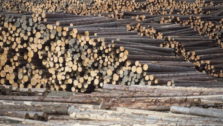 B.C. forest industry grasps for hope amid seven month strike, shutdowns, changes
