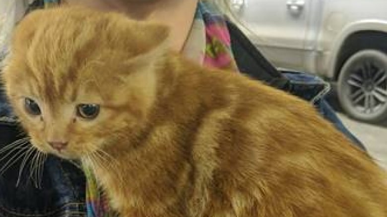 This kitten survived a two-hour drive in a truck engine