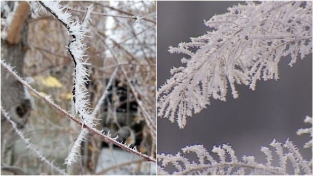 Here's why you need to know the difference between hoarfrost and rime ice   CBC News