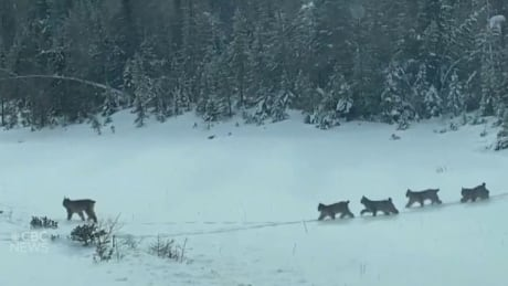 Lynx video screen shot