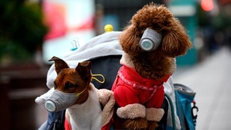 Coronavirus - dogs