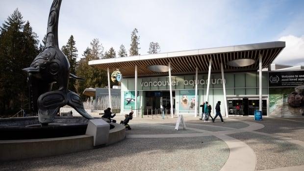 Vancouver Aquarium sold to U.S. tourism company   CBC News