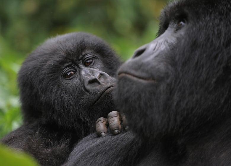 Attack on DRC's Virunga National Park kills at least 17