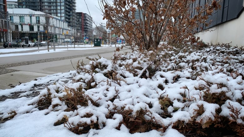 Frost advisory in effect for Waterloo Region