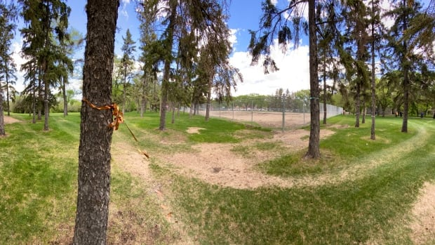 Protesters wrap ribbons around trees to oppose removal for new Wascana Pool