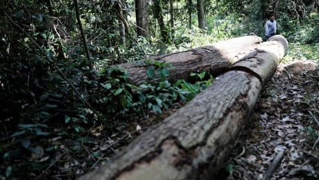 Logging and climate shifts are drastically reducing carbon storage, study says