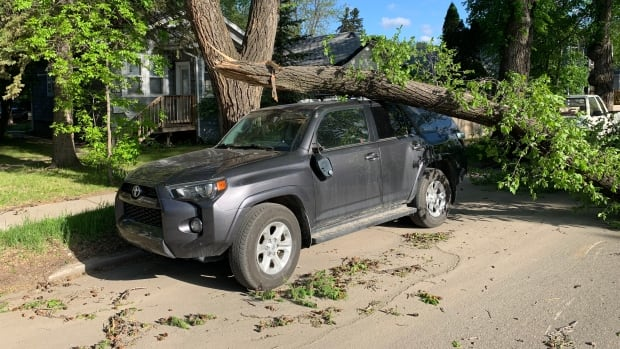 Strong winds down trees, cause power outages Monday morning in Saskatoon