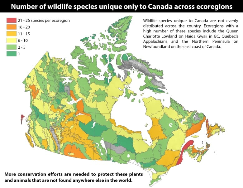 Canada has hundreds of species found nowhere else on Earth | CBC News