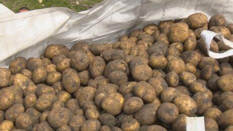 Hay River potatoes